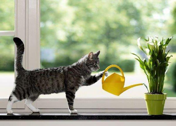 Fun - teach your cat