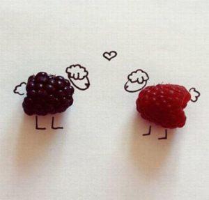 sheeps & berries