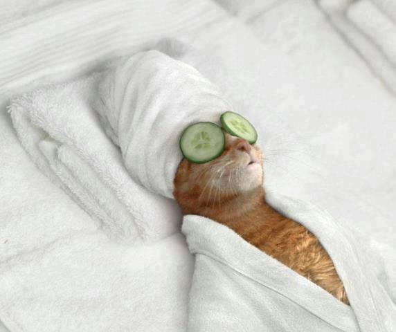 cat in full relax