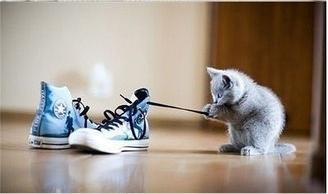 kitten playing shoe
