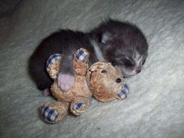 Kitten cuddling her plush toy...