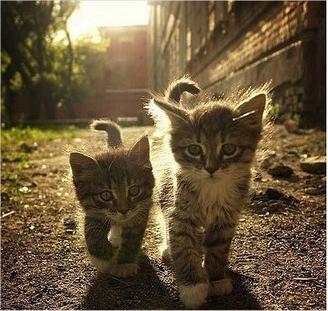 caturday - kitten - brothers 5