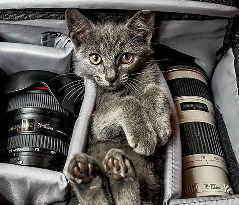 catnon - photography