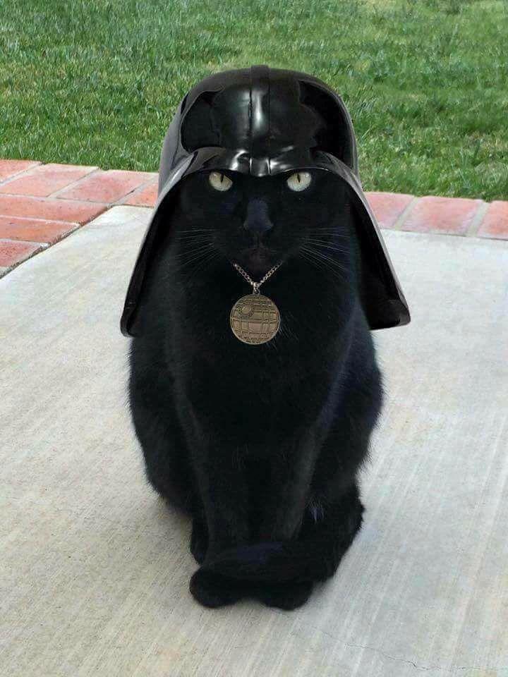 cat-vador (dark vador - darth vader)