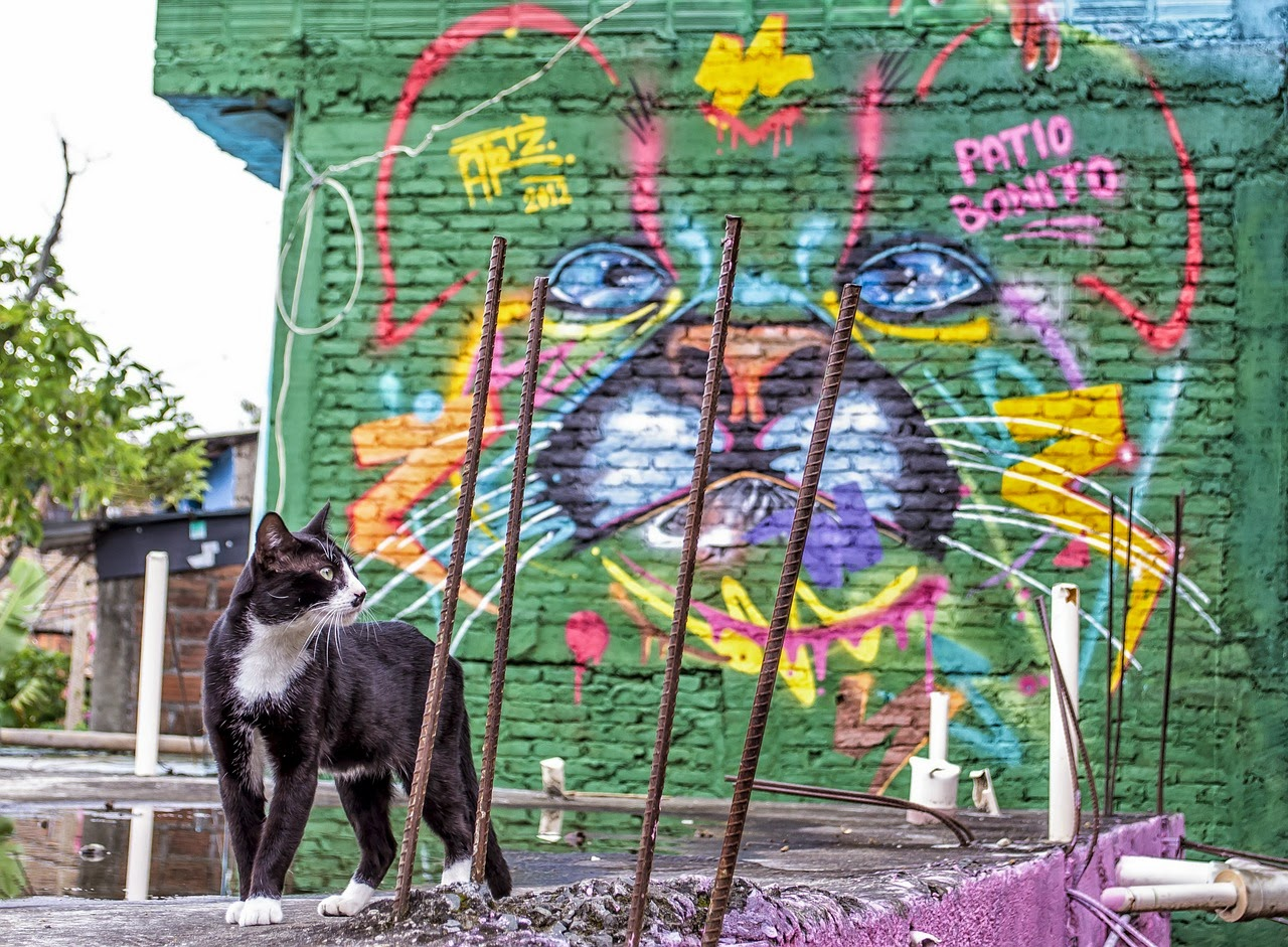 Cat & graffiti