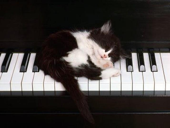 kitten sleepin on piano keyboard