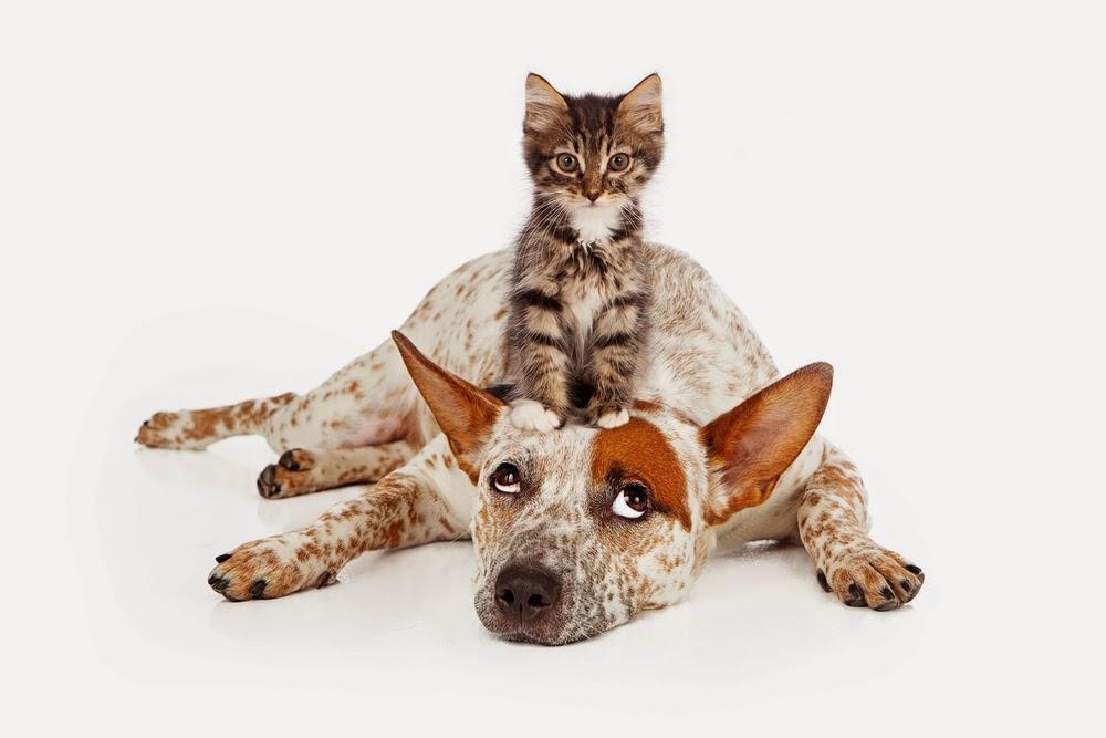 cat dog winner