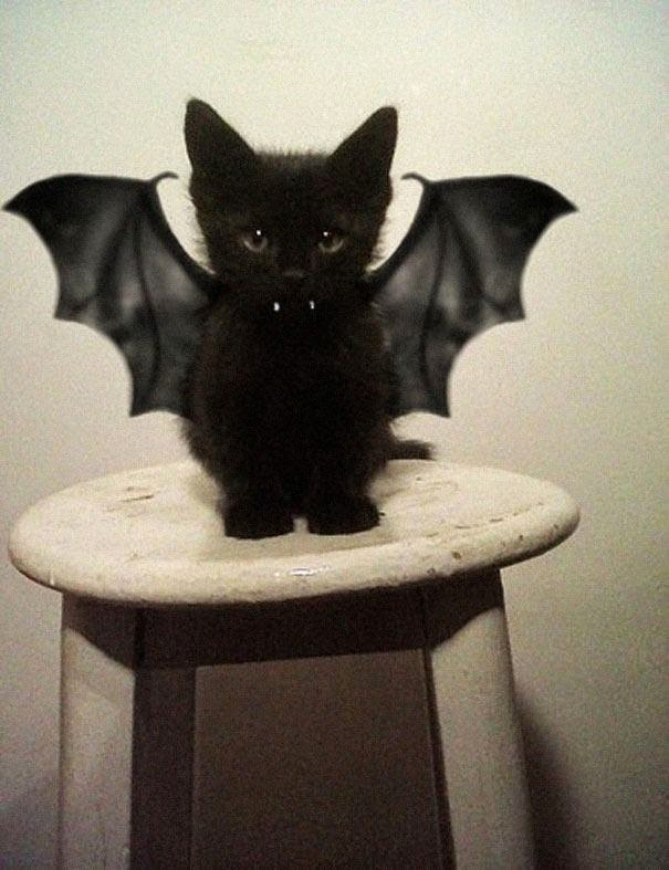 VampiKitten for Halloween