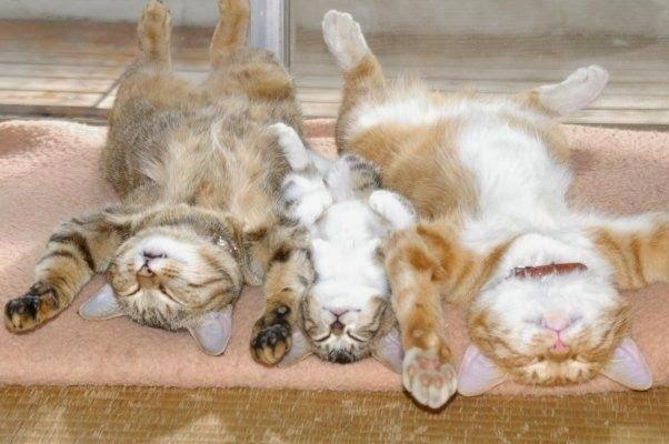 Sleeping family of cats