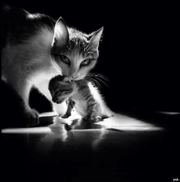 caturday family 4