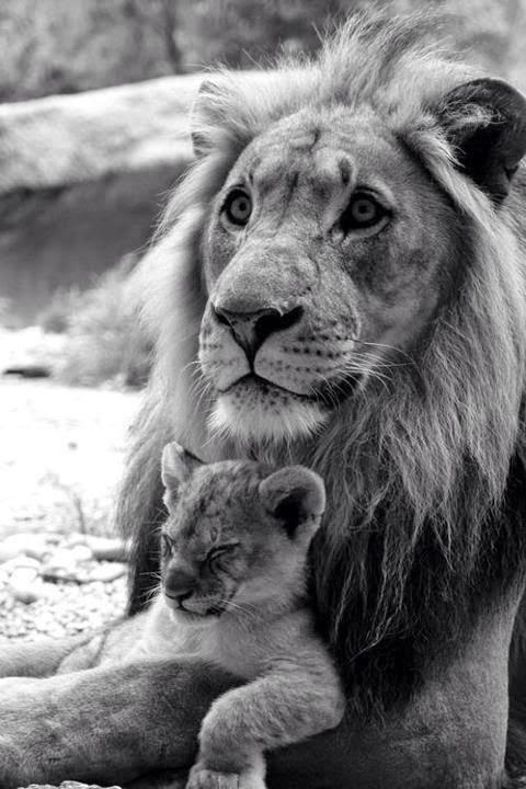 Big cats... 1
