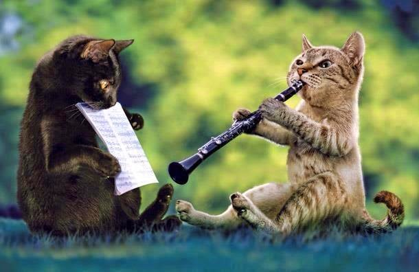 Caturday music