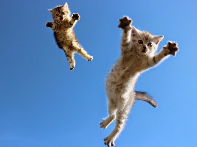 Flying kittens...