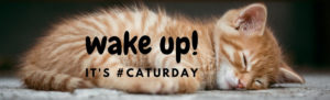 Wake up! it's Caturday