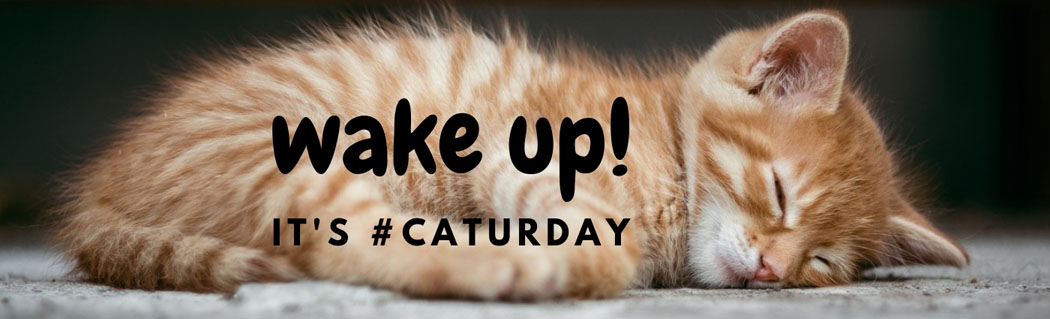 header - wake up caturday