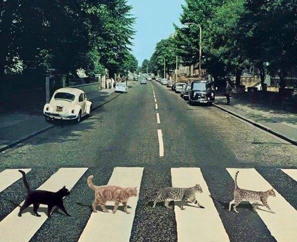 Beatles for Caturday