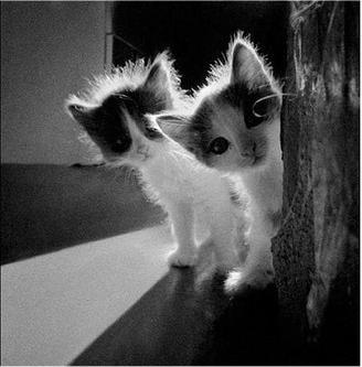 caturday - kitten - brothers 3
