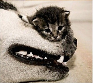 caturday - with dog 1