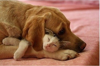 caturday - with dog 2