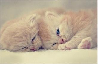 caturday - kitten - brothers 1