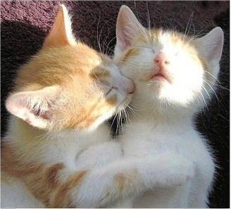 caturday - kitten - brothers 2