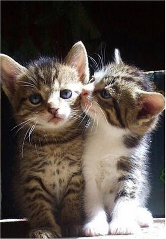 caturday - kitten - brothers 6