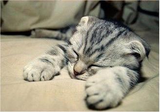 caturday - sleeping 3
