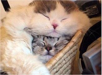 caturday - sleeping 4