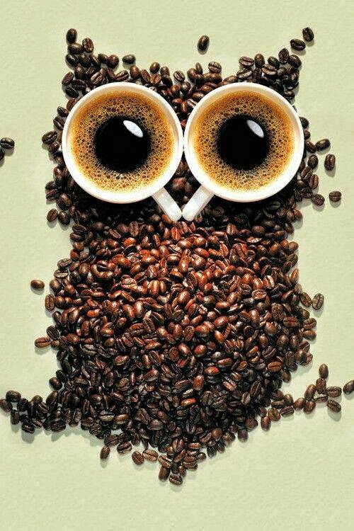 coffee - owl
