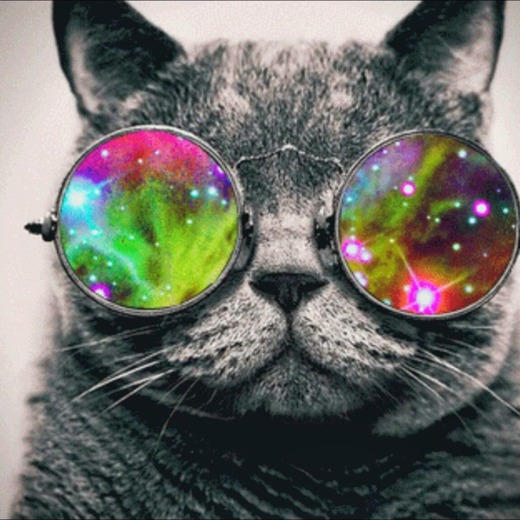 psychedelic cat - caturday