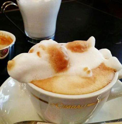 snoopy - foam - coffee