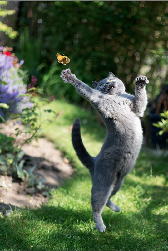 Miss (cat vs butterfly)