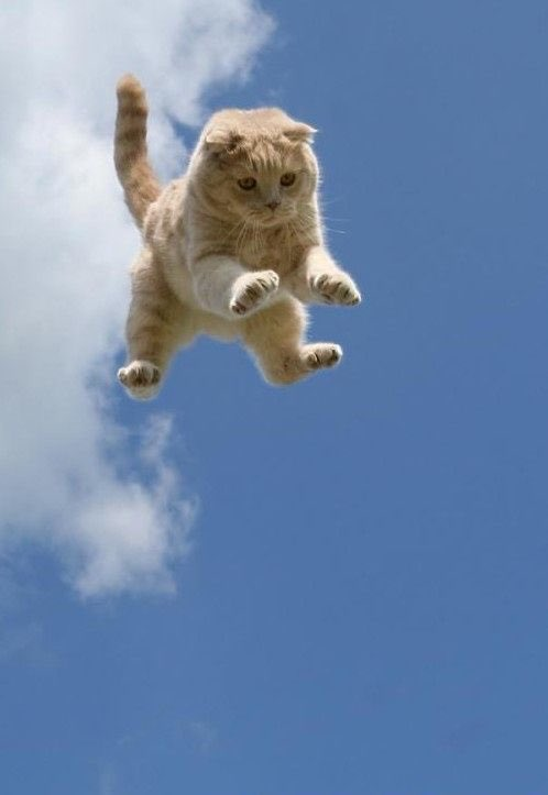 Jumping or flying cat