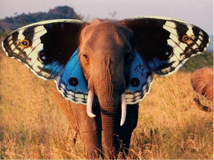 Flying elephant - butterfly