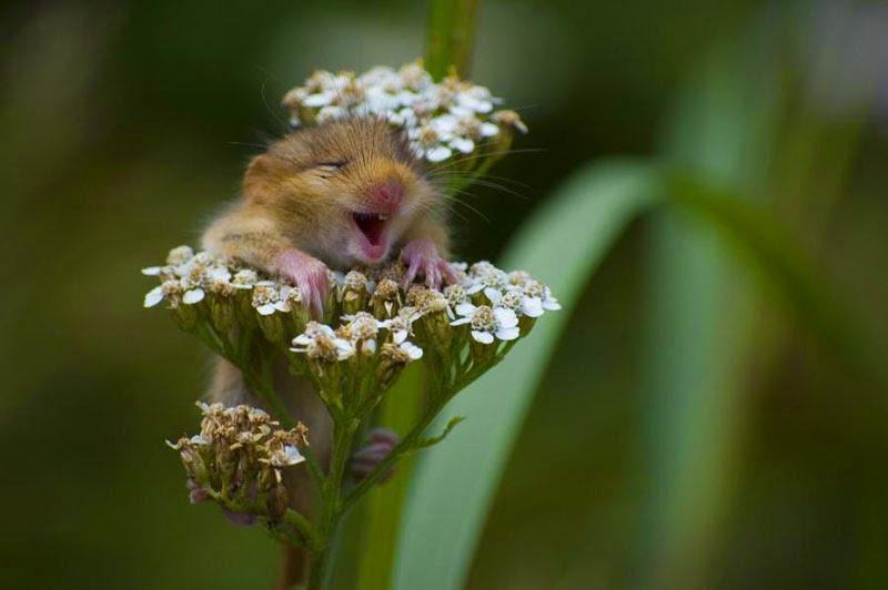 Hamster loves flowers - birthday
